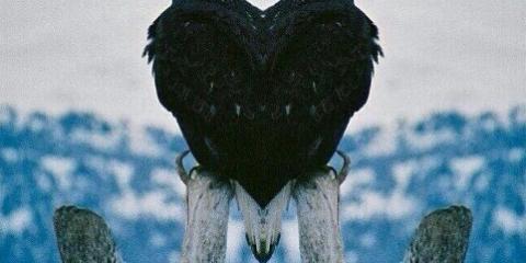 EagleValentines